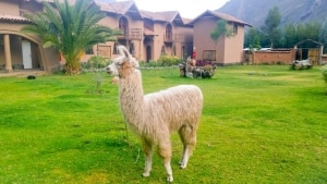 O Peru da Mountain Lodges