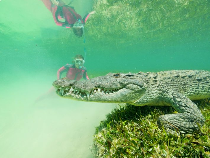 Mergulhando com Crocodilos no Mexico durante as gravações de Aguas Selvagens